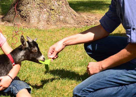 Shaun Groves feeding a goat