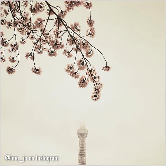 Blossoms ima_ju