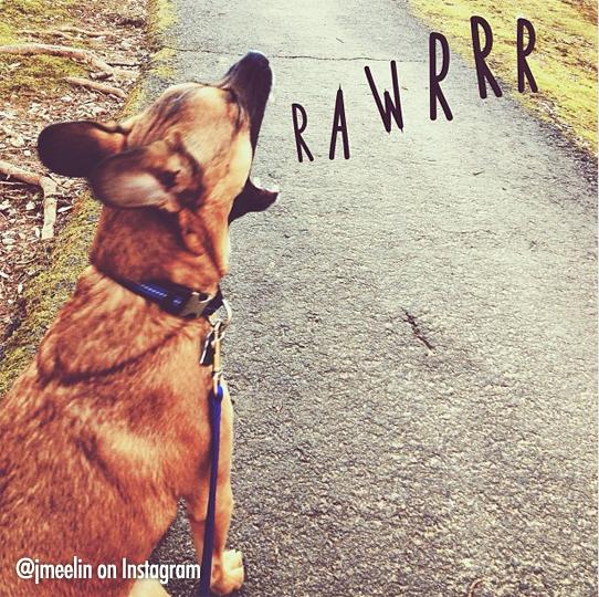 Rawwr Jamie Lynn
