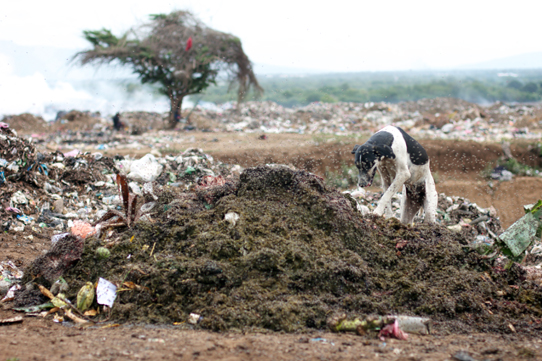 Flies-and-Dogs-Managua-Dump