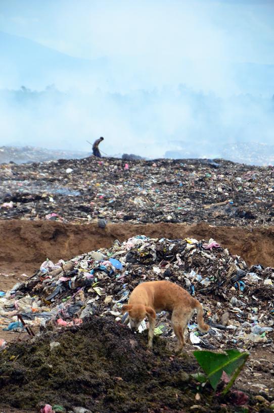 Managua-Dump-Dog