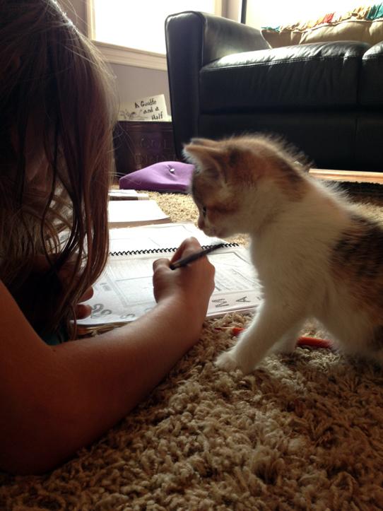 kitten-studying